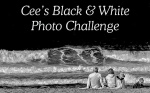 Cee's Black & White Photo Challenge