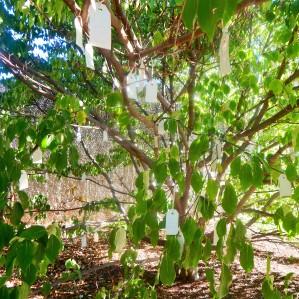 Closeup of Wish Tree