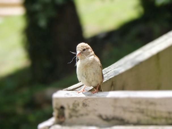 Bird on Edge