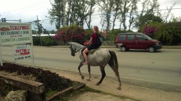 Tourist on Horse