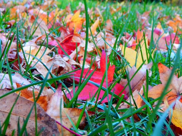 Fallen Leaves in grass