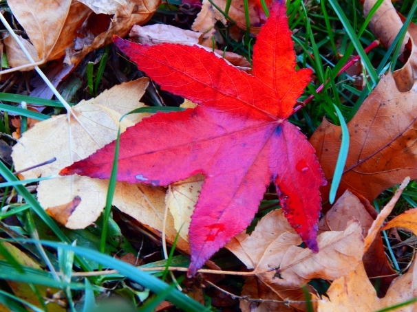 Fallen Leaf, Fall, Autumn, Leaves,
