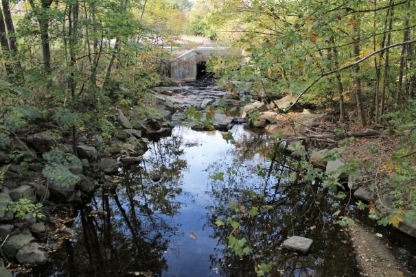 Bellevue Park Creek