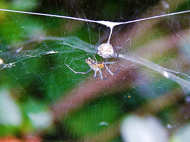 Spider and Nest