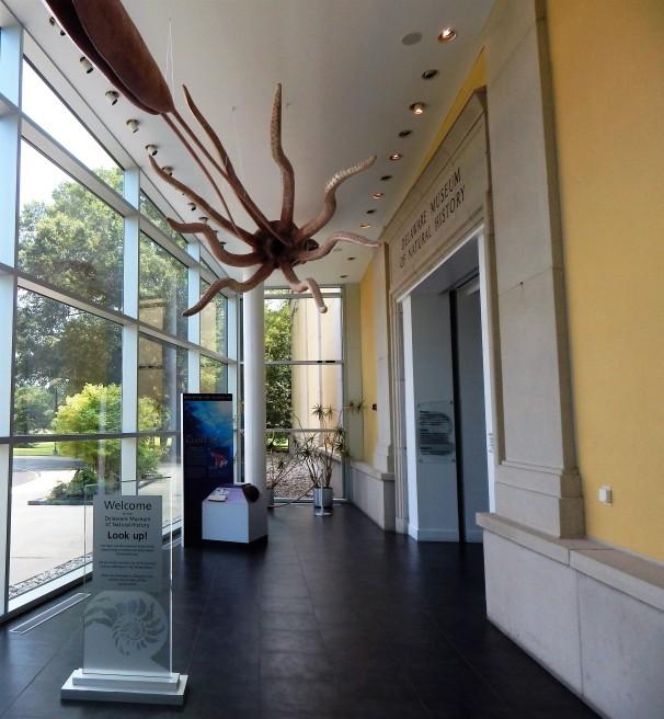 Squid at Museum.jpg