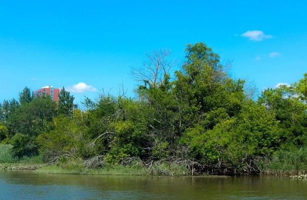 Delaware River Mangrove