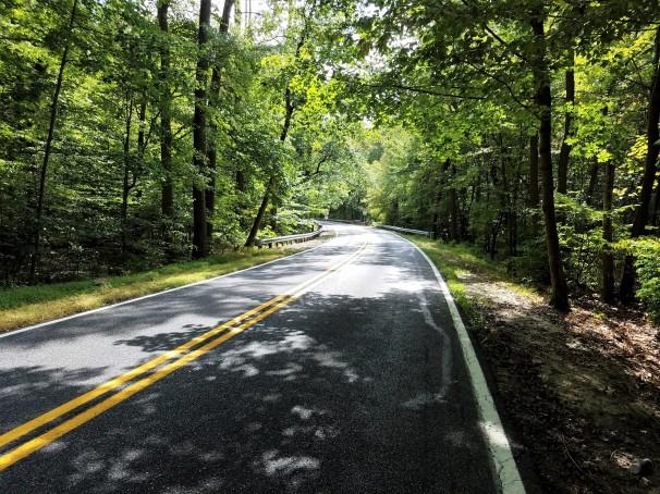 shady-road