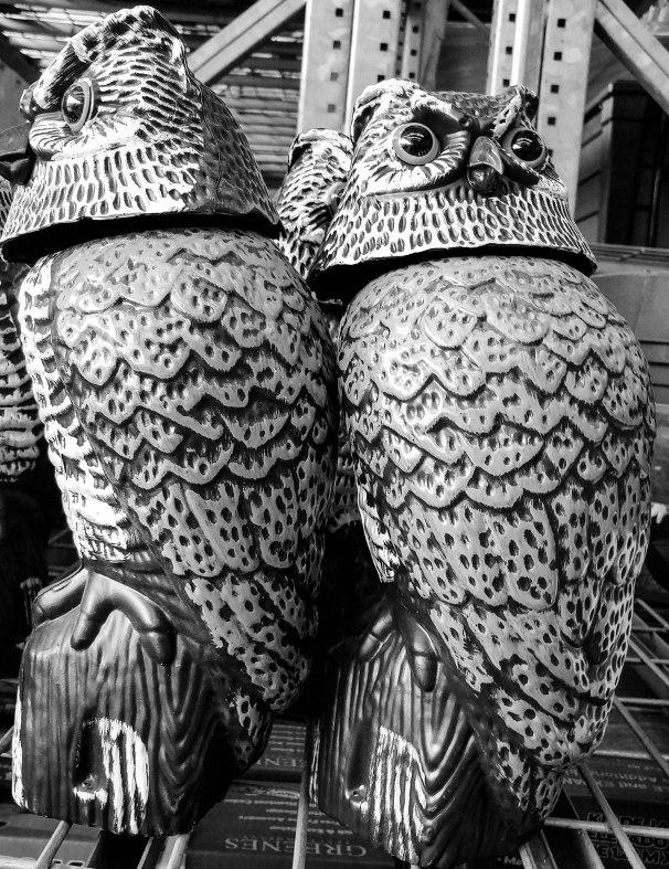 Garden Owls