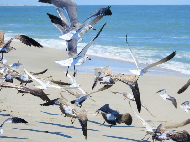 A Flock of Seagulls at Cape May.