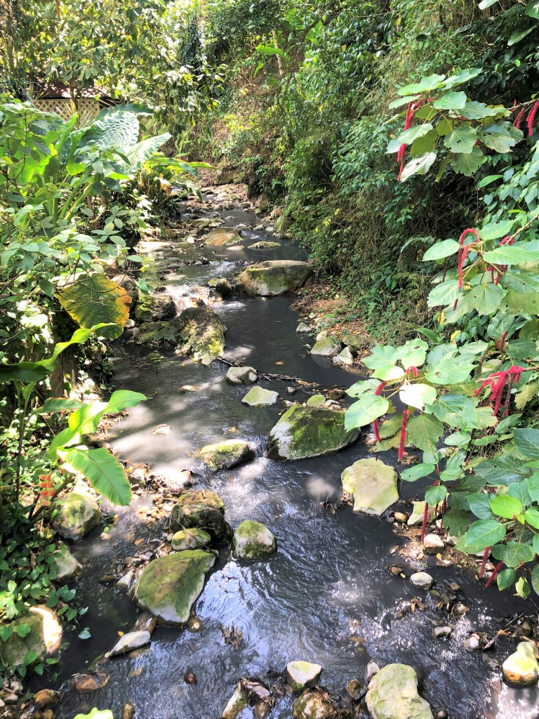 A stream flowing from the Diamond Waterfall at the Diamond Botanical Gardens.